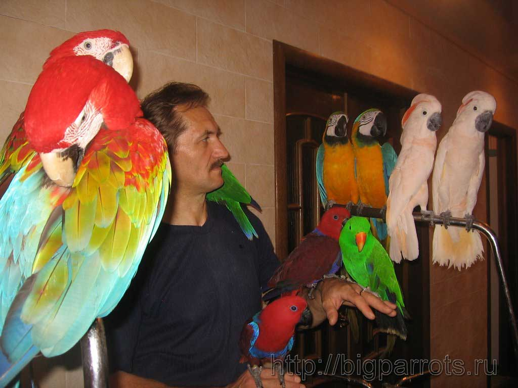 фото попугаев больших